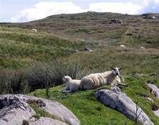 8-daagse wandelvakantie Donegal Way